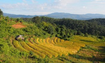 Karen Trekking Adventure Rice field view Huay Kha Lip village
