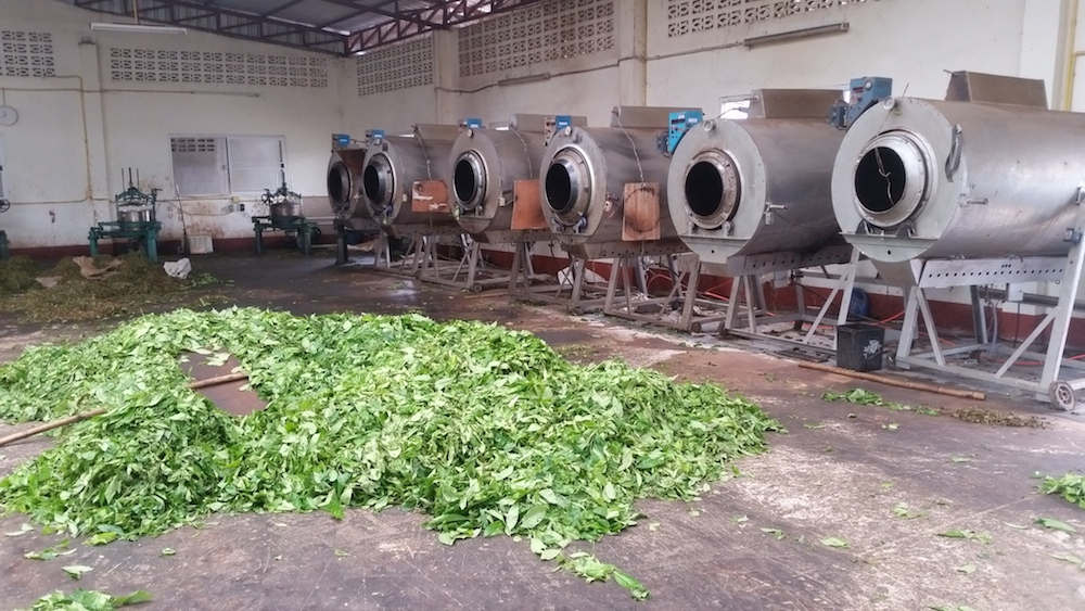 Tea drying cilinders