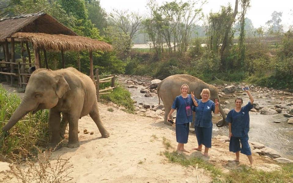 Two elephants and three ladies