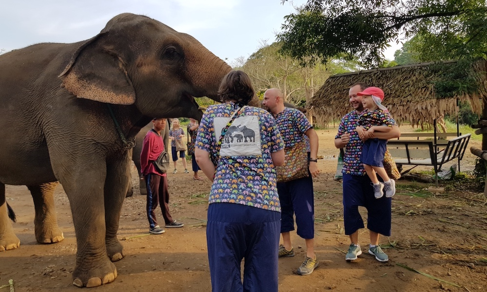 Elephant and tourists