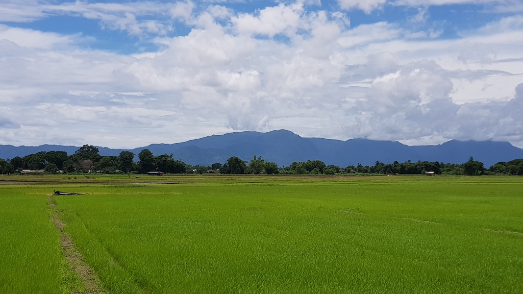 Green ricefields with mountains