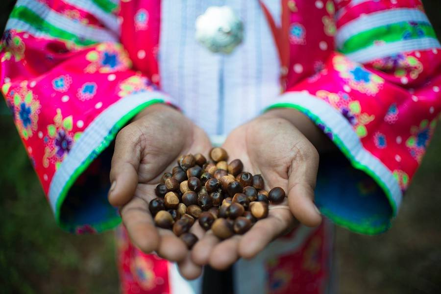 Two tribal hands with coffee beans