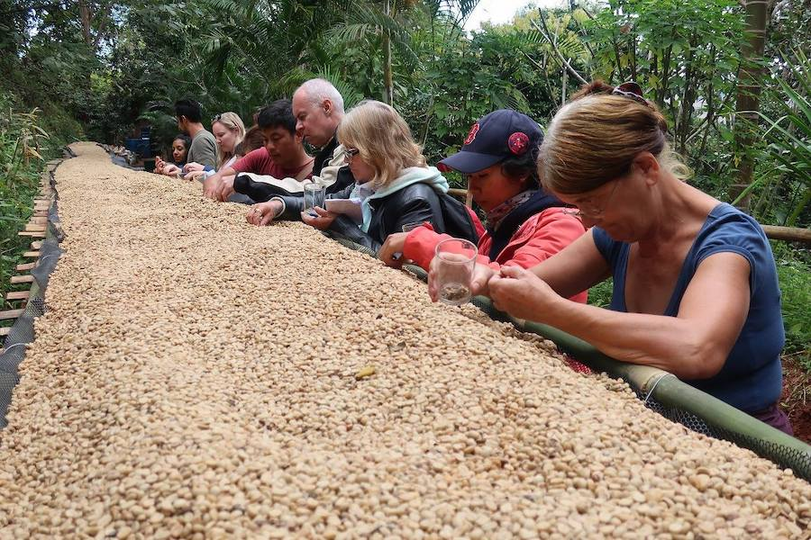 Tourists with coffee beans