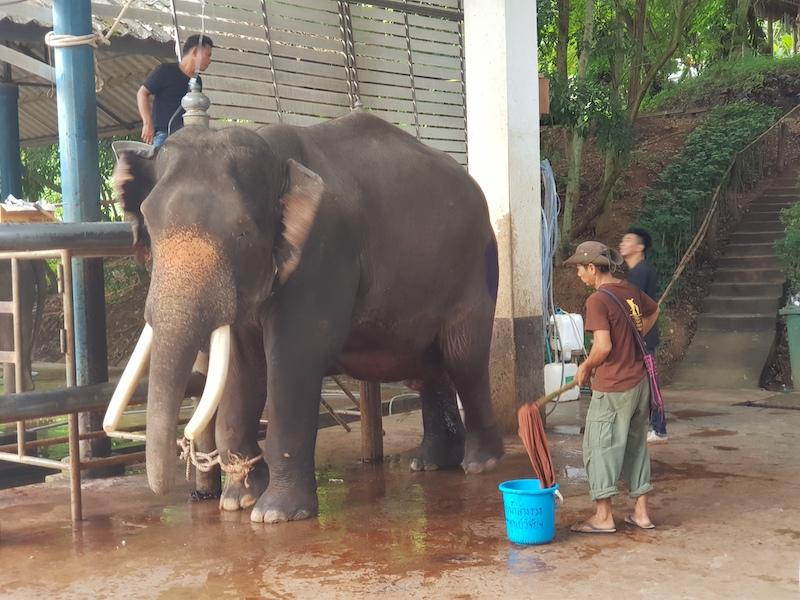 Elephant with people around