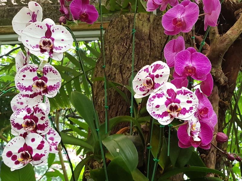 Orchids on a tree Doi Suthep almsgiving